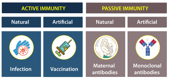 Active Immunity is subdivided into two categories: Natural and Artificial.