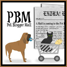 Pet Blogger Mall