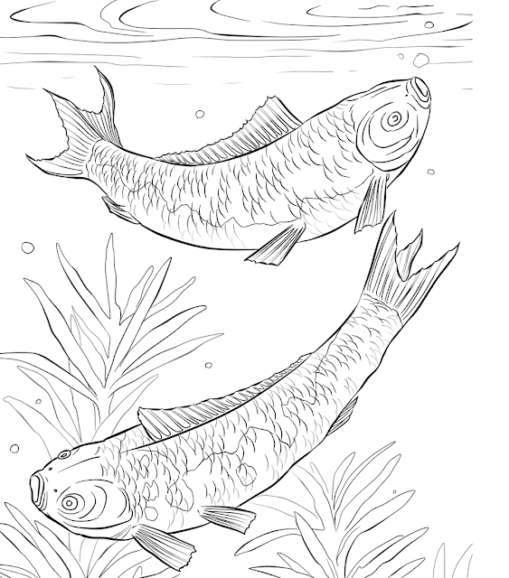 Contoh Gambar Mewarnai Gambar Ikan Air Tawar Kataucap