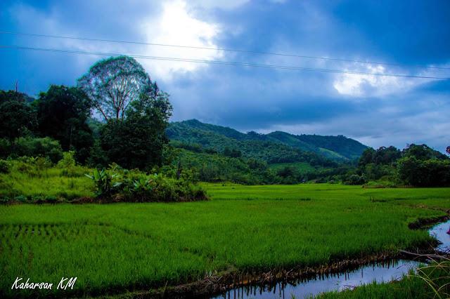 Sawah Desa Nanga Suri, Kecamatan Nangan Mahap, Kabupaten Sekadau, Kalimantan Barat, Indonesia | kaharsan.com