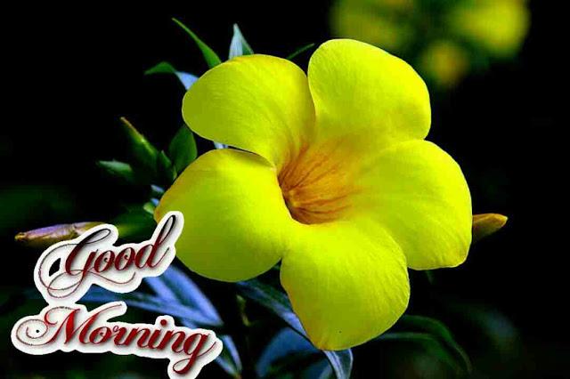 Beautiful yellow flowers good morning wishes