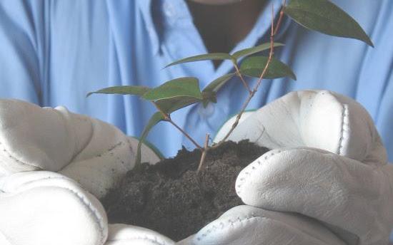 O sadzeniu drzew i dlaczego warto to robić - Czytaj więcej »