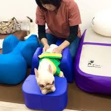 cuidados com cães acamados