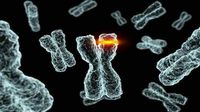 Pengertian dan Macam-Macam Mutasi
