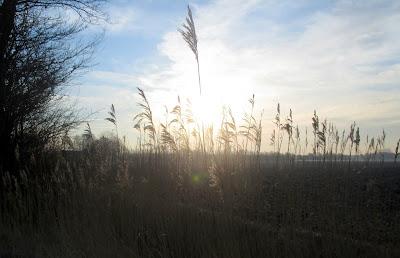 in de polders tussen Vlissingen en Middelburg