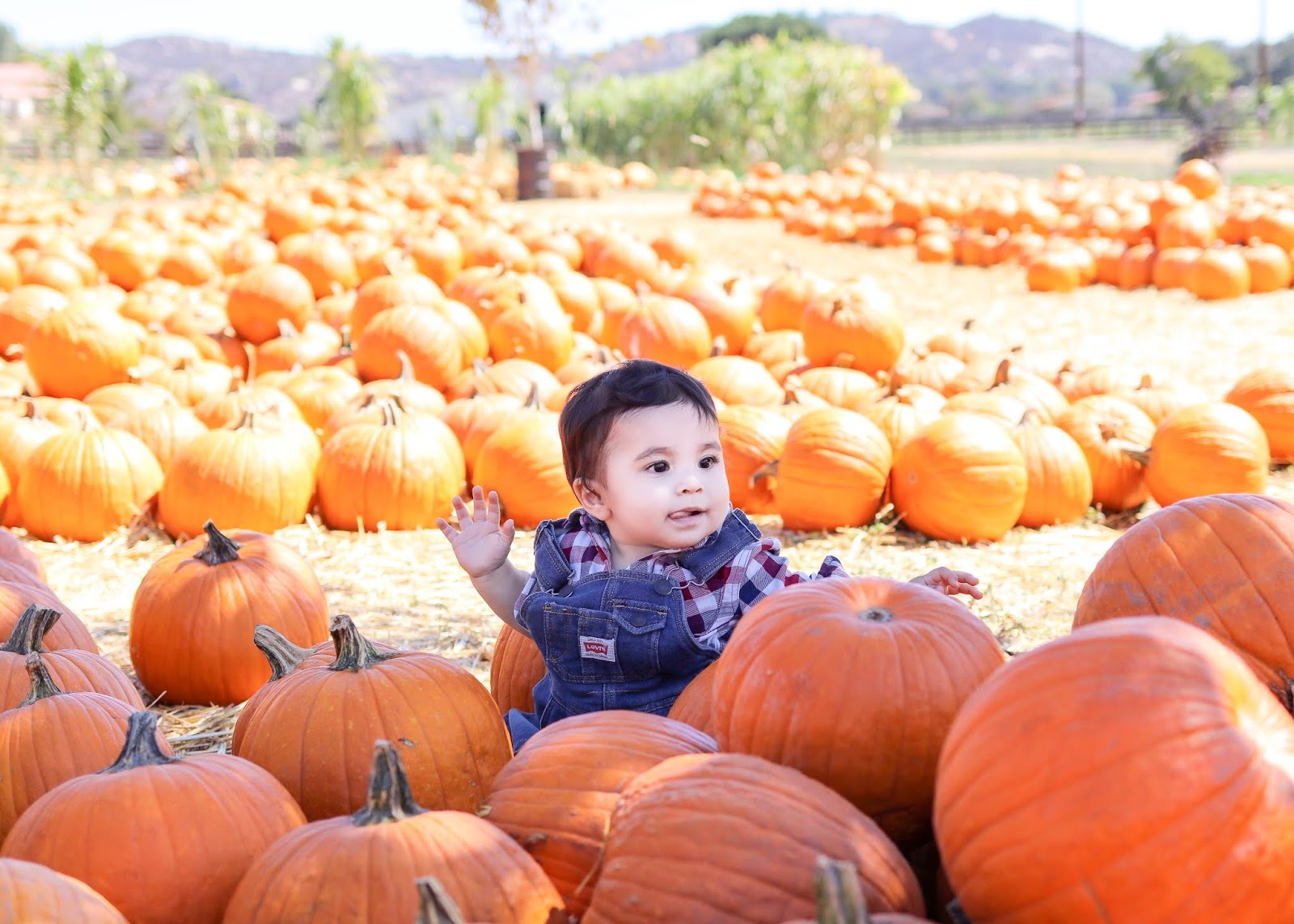 bates nut farm pumpkin patch fun for kids, so cal family blogger