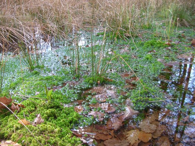 rezerwat, przyroda, flora, woda
