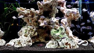 Community Fish Tank 4K HD Background