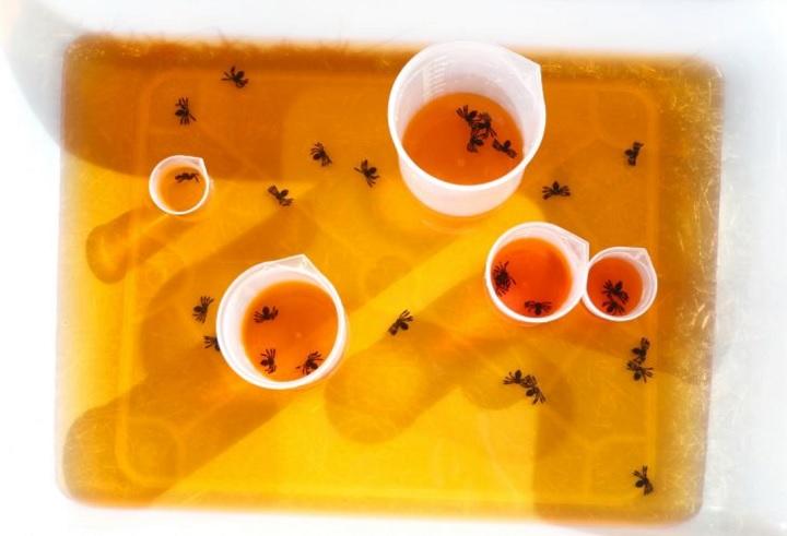 halloween water and spider sensory bin