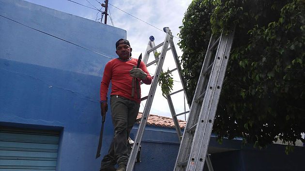 Secretaria de Meio Ambiente já realizou mais de 120 podas de árvores em apenas 15 dias em Delmiro Gouveia