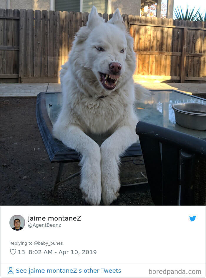 30 Adorably Unflattering Pictures Of Pets