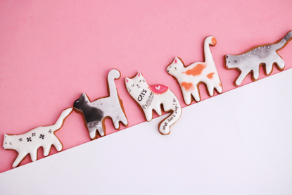cat-shaped biscuits on a pink background