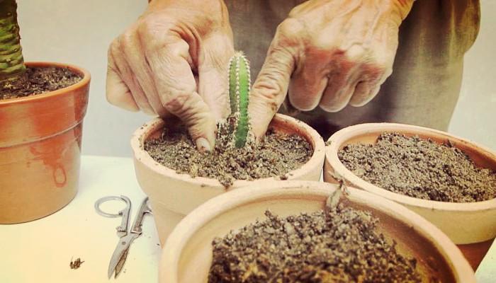 Sustrato de cactus