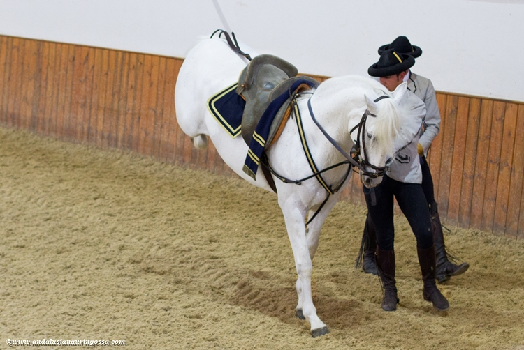 Andalusian kuninkaallinen hevoskoulu Jerez_Andalusian Royal Equestrian School Jerez_6