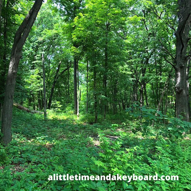 Surrounded by the emeralds of the forest at Tekakwitha Woods Forest Preserve.