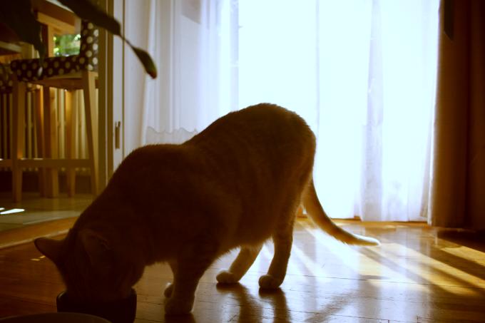Préparer à manger à son chat : recettes maison naturelles et simples