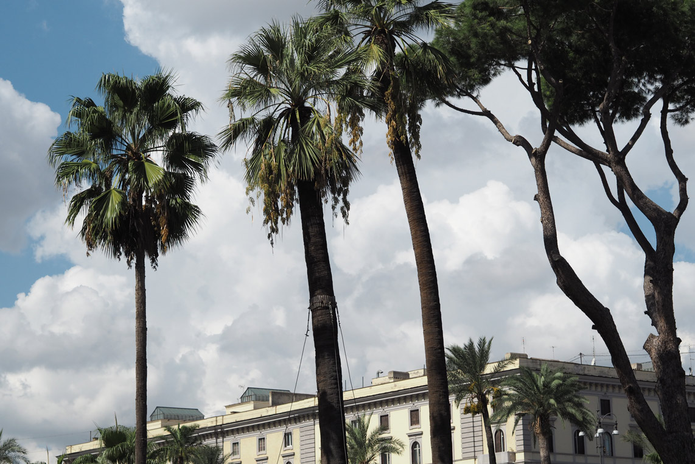 ROME DIARY II. 23