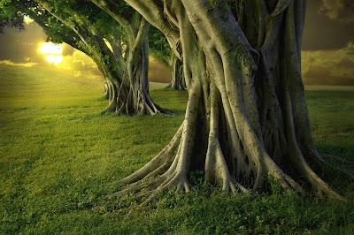 Keindahan Pepohon Variasi Alam...