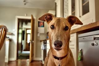 Cómo adaptar tu hogar a la llegada de un perro