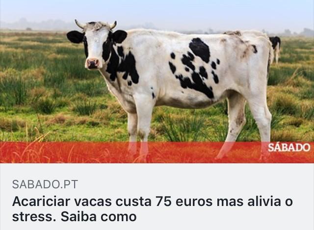 https://www.sabado.pt/insolito/detalhe/acariciar-vacas-custa-75-euros-mas-alivia-o-stress-saiba-como?fbclid=IwAR1QcLK1lnyvty1kr9R9HX4qKNhmH395uj_ibB3VN5kMFjpO_G2AeOA_1Is