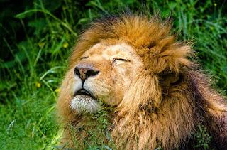 Singa, Ular, Tikus Kembar dan Madu