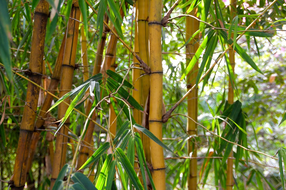 pixabaycomenbamboo forest tropical fores