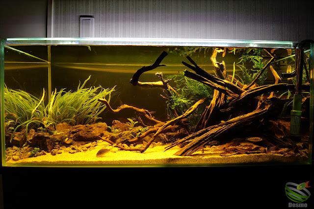 blackwater tank