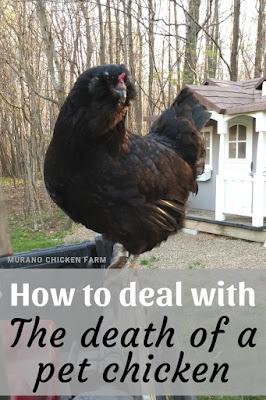 when chickens die