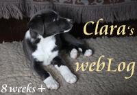 Clara's webLog 8 weeks +