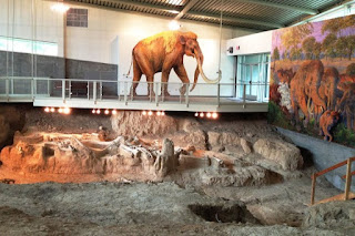 In Waco, Texas is a dig site for mammoths that visitors can see. The mammoths were probably buried in an Ice Age flood subsequent to the Genesis Flood