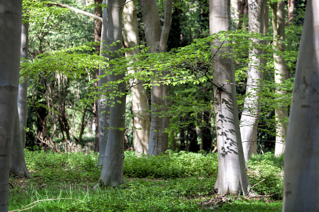 Woodland scene in the spring sunshine at Lynford Arboretum in Thetford Forest