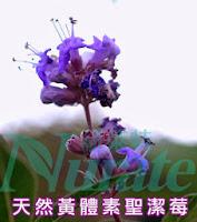聖潔莓亦是一種天然來源的孕激素