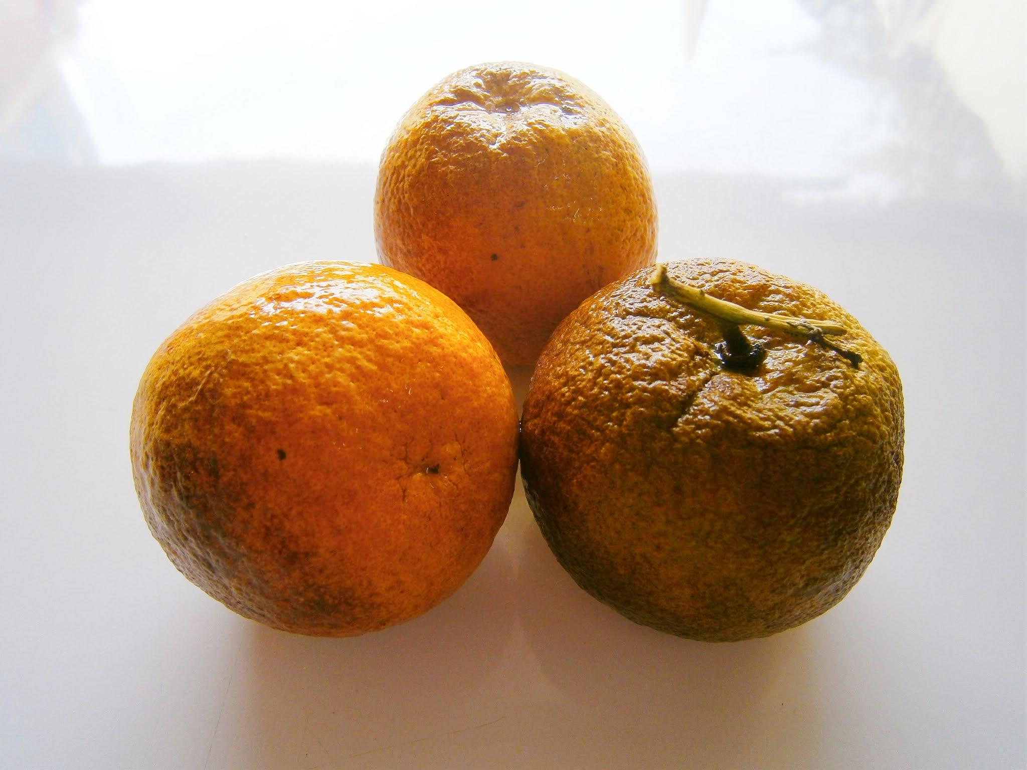 Naranjas frescas y bien hermosas puestas sobre un fondo de color blanco