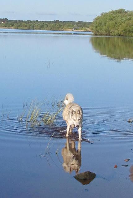 собака у реки