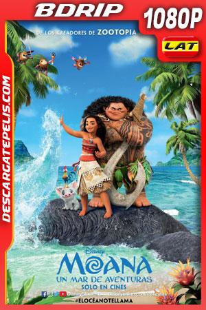 Moana: Un mar de aventuras (2016) 1080p BDrip Latino – Ingles