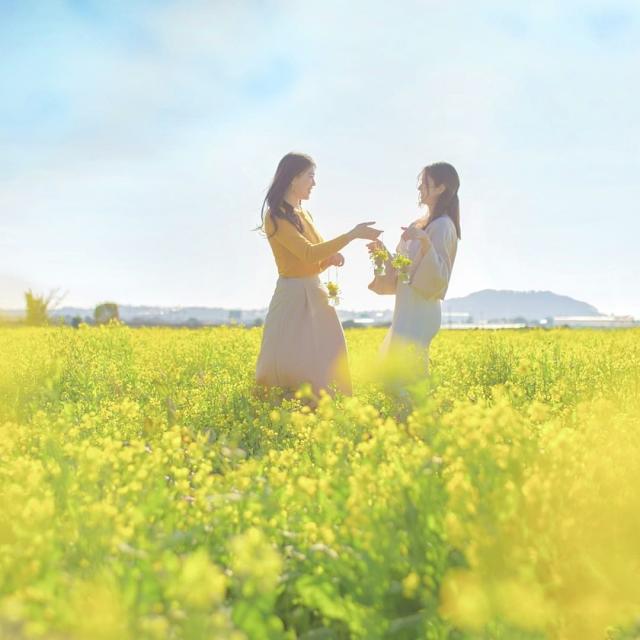 Lễ hội hoa cải còn là một trong những điểm nhấn chính của mùa xuân Seoul. Tại đây, bạn sẽ được thưởng thức sắc vàng tươi tắn của hoa bên cạnh dòng sông Hàn xinh đẹp. Ngoài ra, còn nhiều vườn hoa nổi tiếng khác của Hàn Quốc mà bạn nên ghé thăm như công viên sinh thái Daejeo (Busan), đài quan sát Cheomseongdae (Gyeongju), công viên Haesindang (Samcheok Maengbang)...
