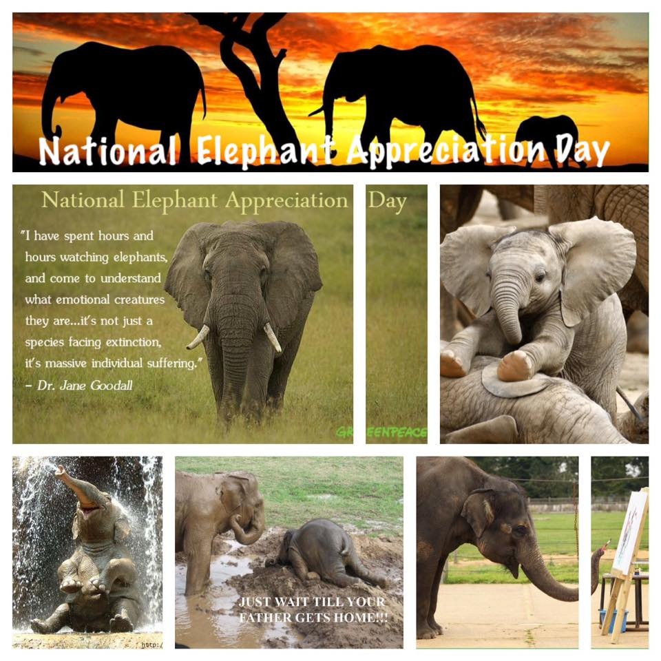 National Elephant Appreciation Day Wishes pics free download