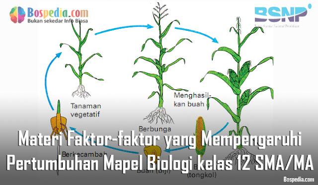 Materi Faktor-faktor yang Mempengaruhi Pertumbuhan Mapel Biologi kelas 12 SMA/MA
