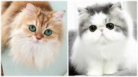 صور قطط كيوت 2019 خلفيات قطط جميلة جدا