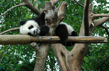 1. Panda