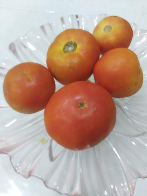 TOMATO - The Wonder Fruit