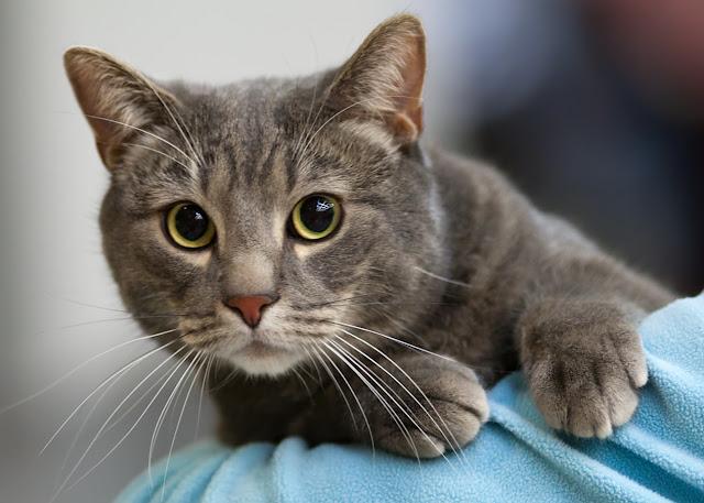 ΑΔΙΑΝΟΗΤΟ! Άνδρας σκό-τω-σε 21 γάτες και βία-σε άλλη μια! γιος  αρχηγού της αστυνομίας