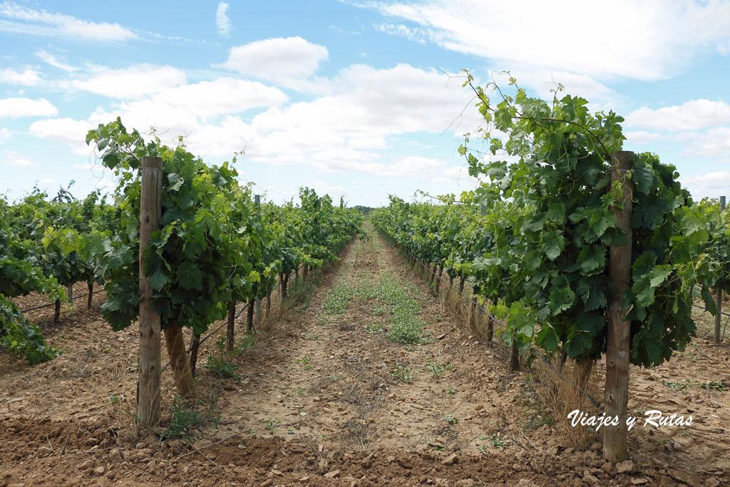 Viñedos de la Ruta del vino de Toro