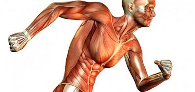 Músculo, movimiento ejercicio físico