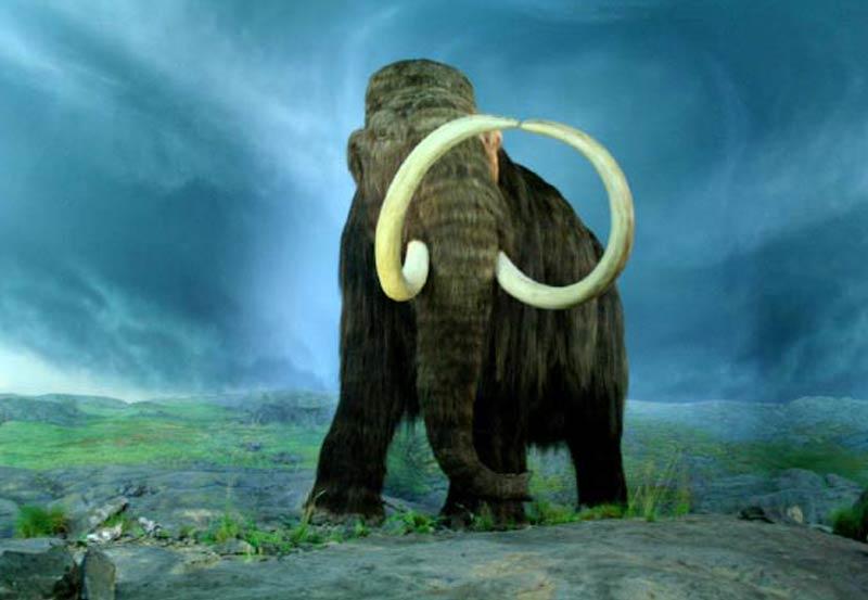 Mamutes coexistiram com os primeiros americanos