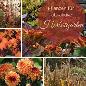 *Pflanzenvorschläge