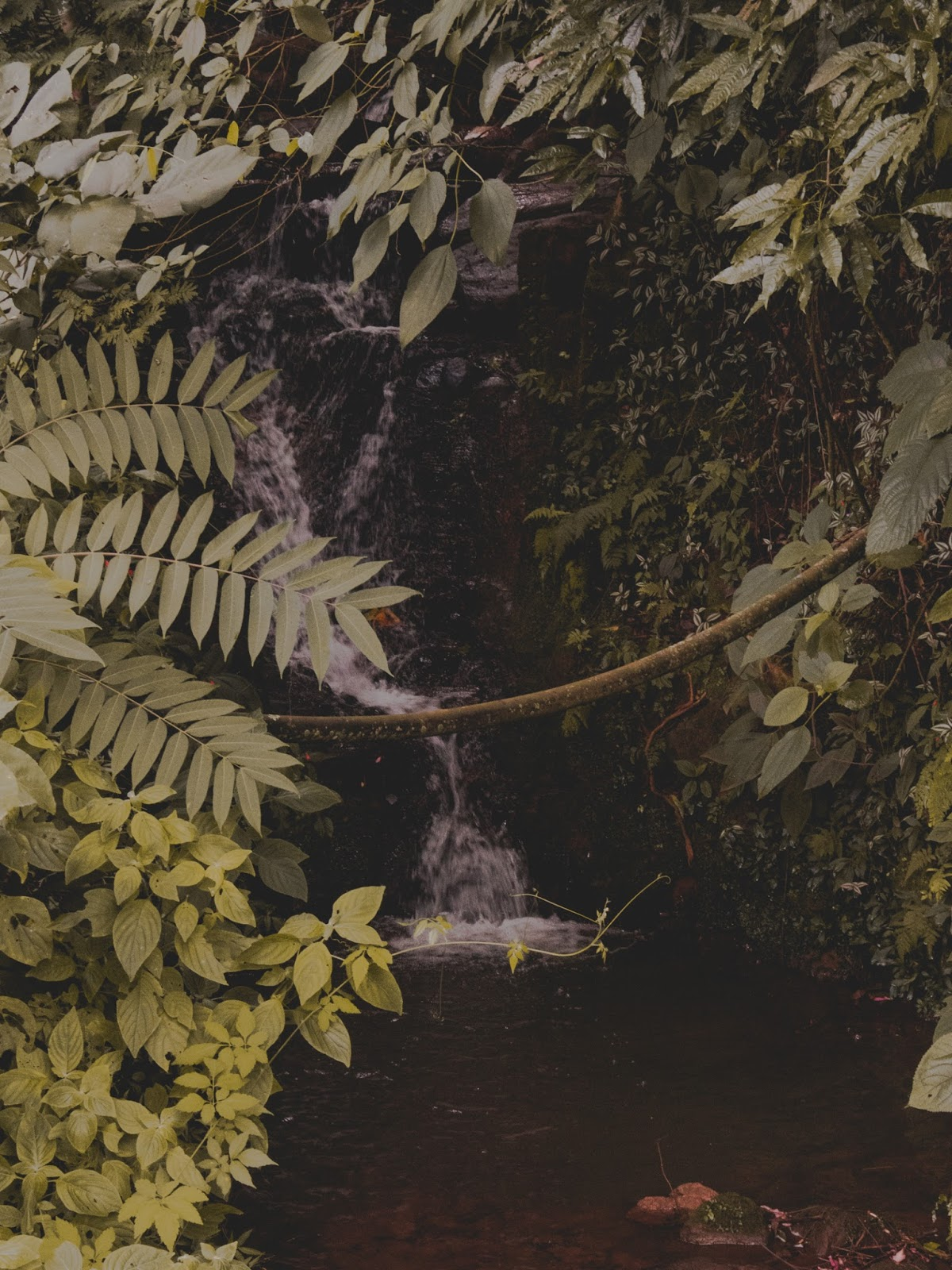 cachoeira no mato