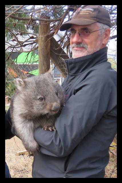 Bonorong Wildlife Sanctuary - Bob and Tina the Wombat