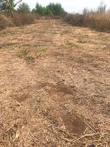 Đất sào Sông Trầu