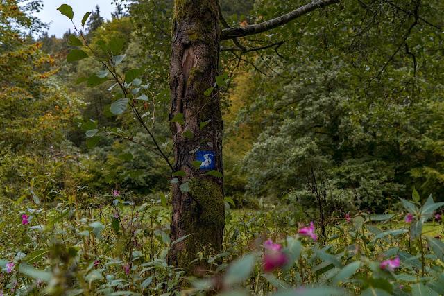 Wildwiesenweg – Eitorf | Wandern in der Naturregion-Sieg | Erlebniswege Sieg 04